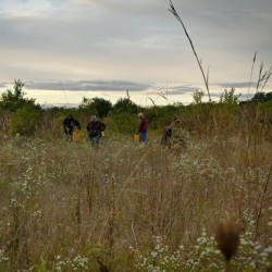Volunteer Work Day #4: Clearing Invasives @ Welty Environmental Center
