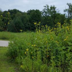 End-of-Summer Volunteer Work Day 8.29.18 @ Welty Environmental Center